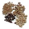 Семена на ленте и дражированные